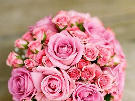 festa della mamma o del papà fiori piante pianta fiore